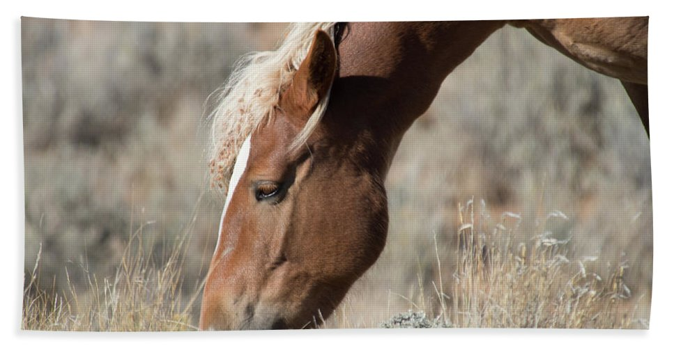 Cody Beach Towel featuring the photograph Grazing Wild Horse by Frank Madia