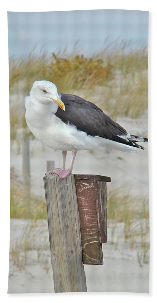 Seagull Beach Towel featuring the photograph Great Black Backed Gull - Larus Marinus by Mother Nature