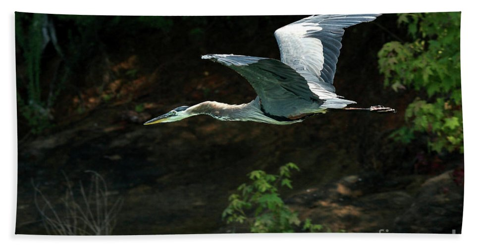 Heron Beach Towel featuring the photograph Great Blue Fly-by II by Douglas Stucky