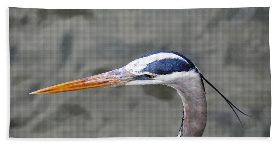 Bird Beach Towel featuring the photograph Great Blue Heron At Morikami Gardens by Rich Bodane