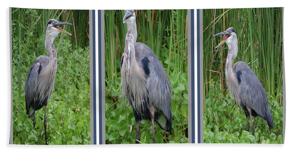 Bird Beach Towel featuring the digital art Great Blue Heron Collage by DigiArt Diaries by Vicky B Fuller