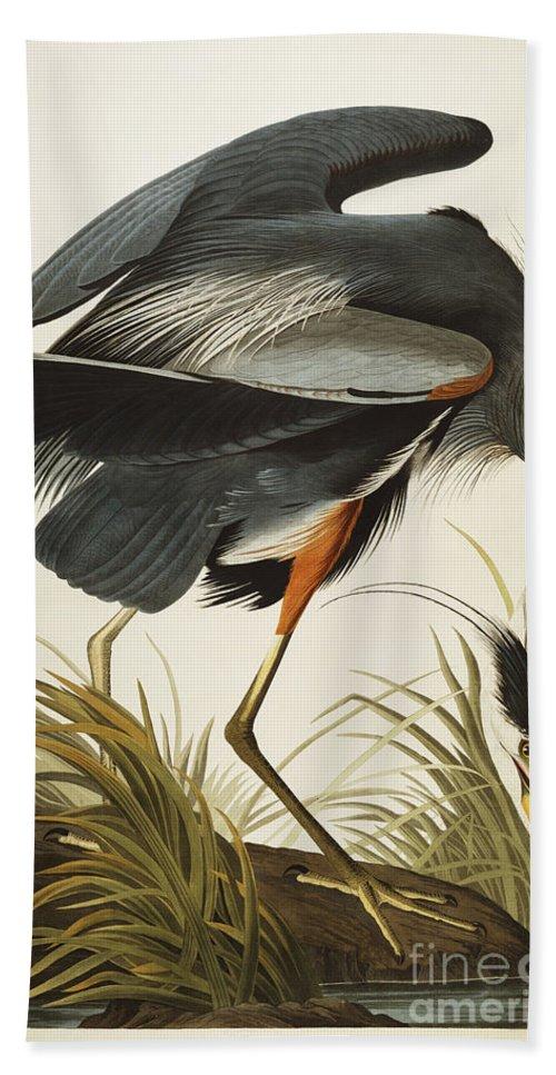 Great Blue Heron Beach Towel featuring the drawing Great Blue Heron by John James Audubon