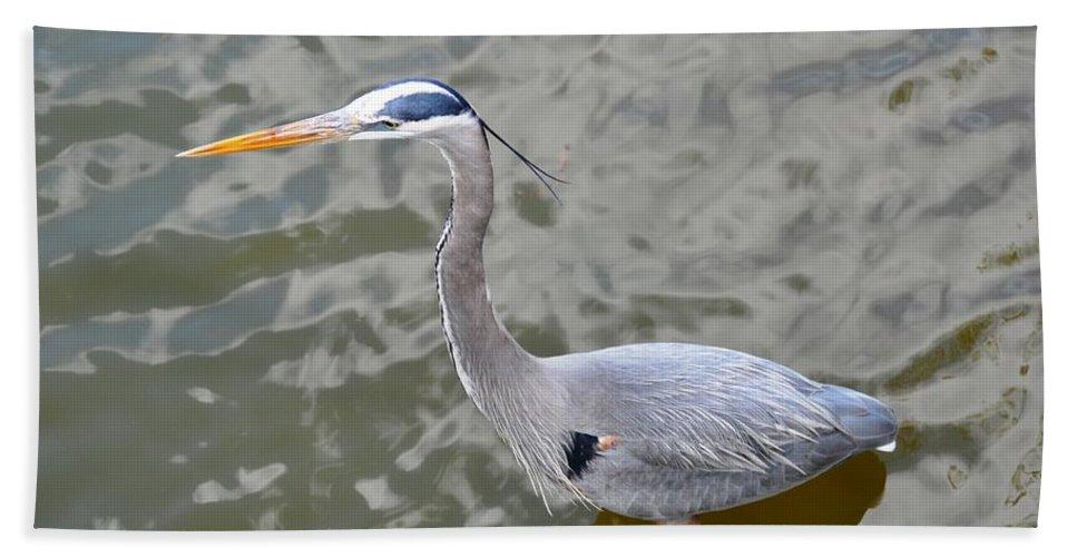 Bird Beach Towel featuring the photograph Great Blue Heron by Rich Bodane