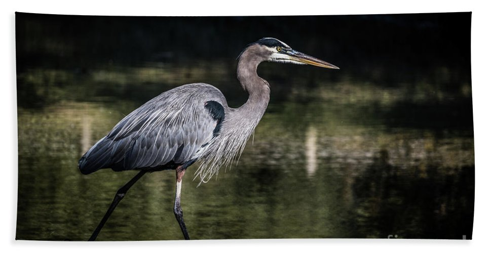 America Beach Towel featuring the photograph Great Blue Heron by Thomas Marchessault