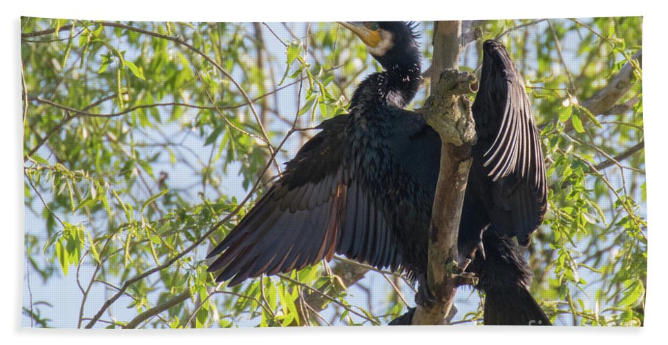 Animal Beach Towel featuring the photograph Great Cormorant - High In The Tree by Jivko Nakev