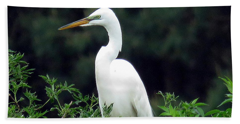 Egret Beach Towel featuring the photograph Great Egret 19 by J M Farris Photography