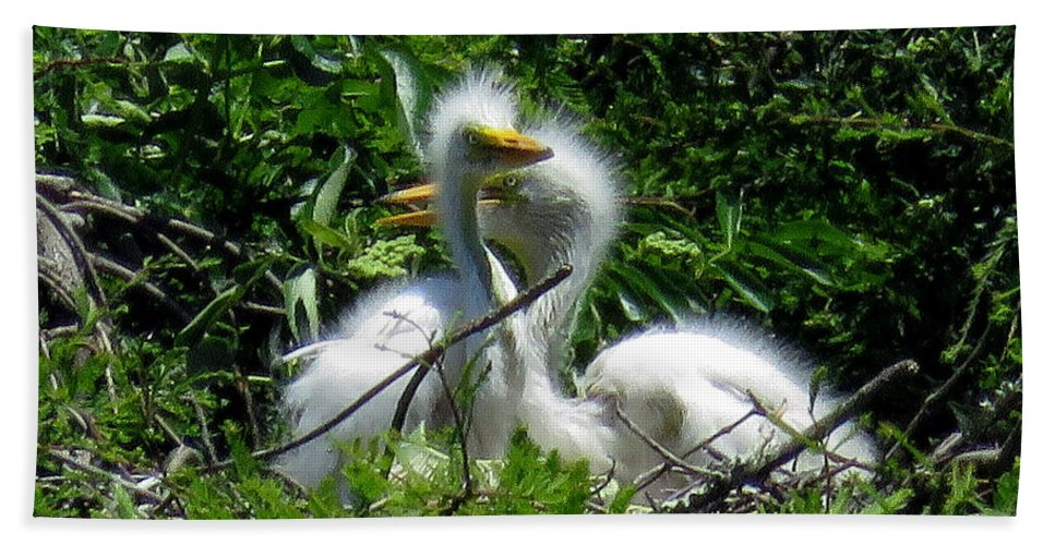 Great Egret Chicks Beach Towel featuring the photograph Great Egret Chicks 1 by J M Farris Photography