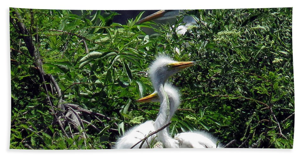 Great Egret Chicks Beach Towel featuring the photograph Great Egret Chicks 2 by J M Farris Photography