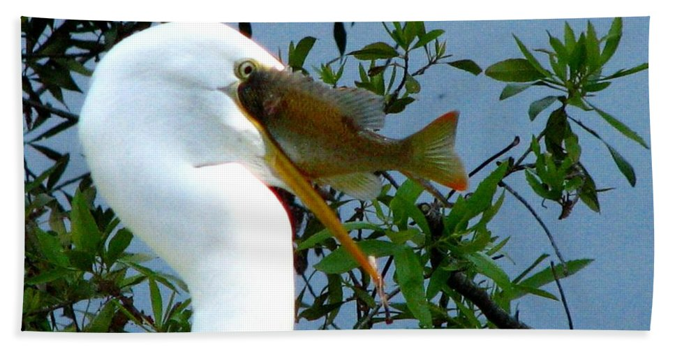Egret Beach Towel featuring the photograph Great Egret With Catch 2 by J M Farris Photography