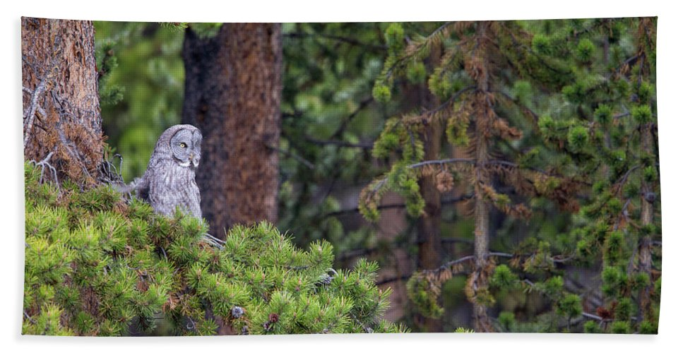 Great Gray Owl Beach Towel featuring the photograph Great Gray Owl Perched by Max Waugh