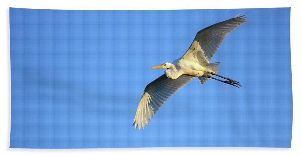 Beach Sheet featuring the photograph Great Heron In Flight I by Tony Umana
