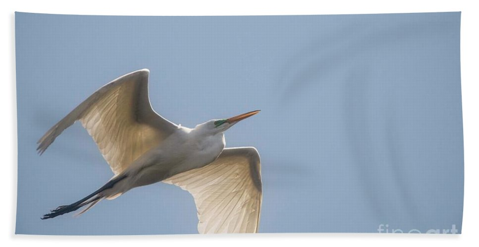 Egret Beach Towel featuring the photograph Great White Egret - 2 by David Bearden