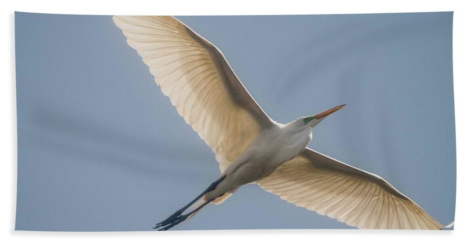White Egret Beach Towel featuring the photograph Great White Egret by David Bearden