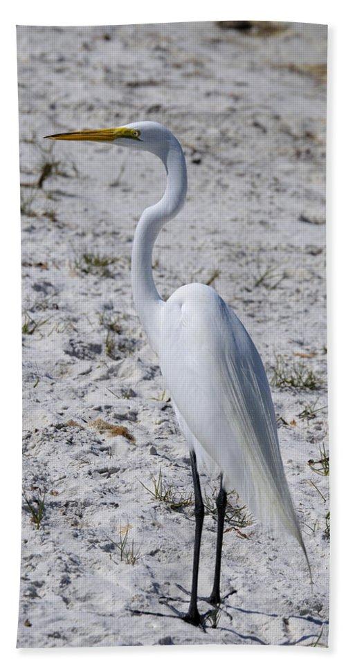White Beach Towel featuring the photograph Great White Egret by Deborah Weinhart