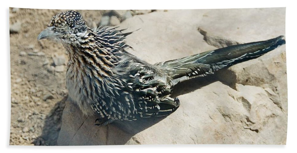 Nature Beach Towel featuring the photograph Greater Roadrunner by Frank Townsley