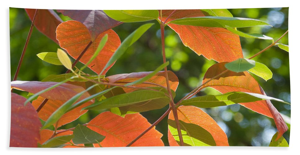 Leaves Beach Towel featuring the photograph Green And Orange Leaves by Robert VanDerWal