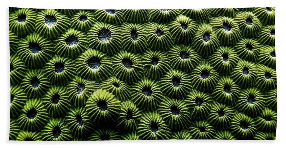 Coral Beach Towel featuring the photograph Green Coral by Dragica Micki Fortuna