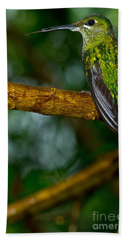 Green-crowned Brilliant Beach Towel featuring the photograph Green-crowned Brilliant Hummingbird by Dant� Fenolio