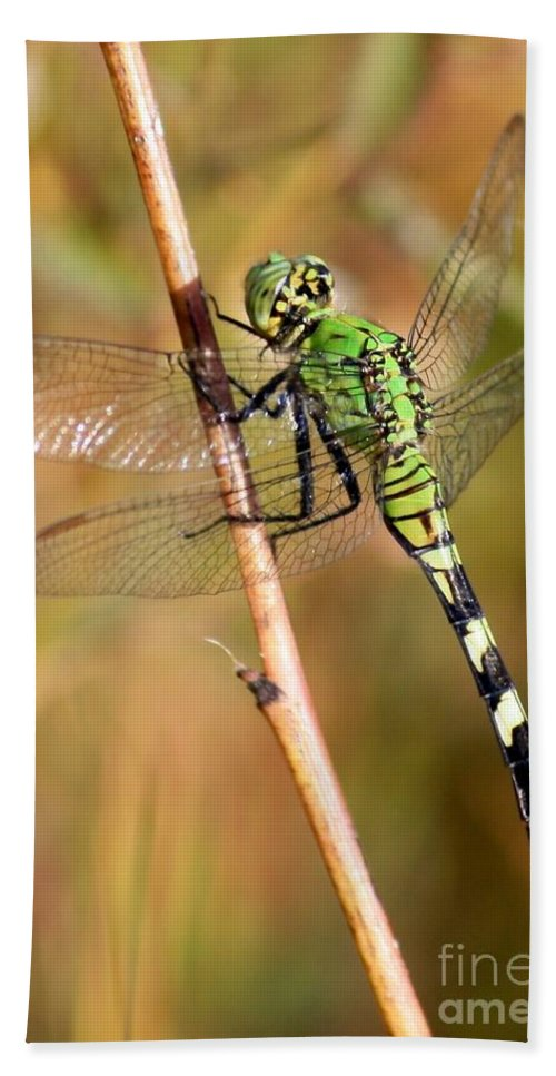 Dragonfly Beach Towel featuring the photograph Green Dragonfly Closeup by Carol Groenen