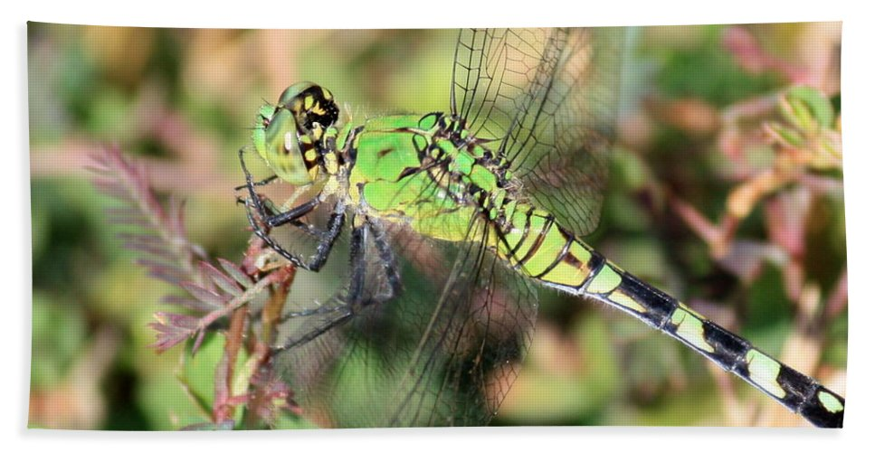 Green Dragonfly Beach Towel featuring the photograph Green Dragonfly Macro by Carol Groenen