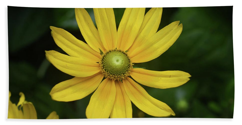 Daisy Beach Towel featuring the photograph Green Eyed Daisy by Sally Sperry