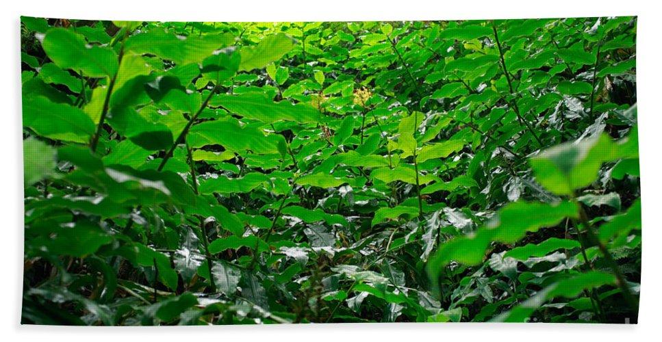 Deep Forest Beach Sheet featuring the photograph Green Foliage by Gaspar Avila