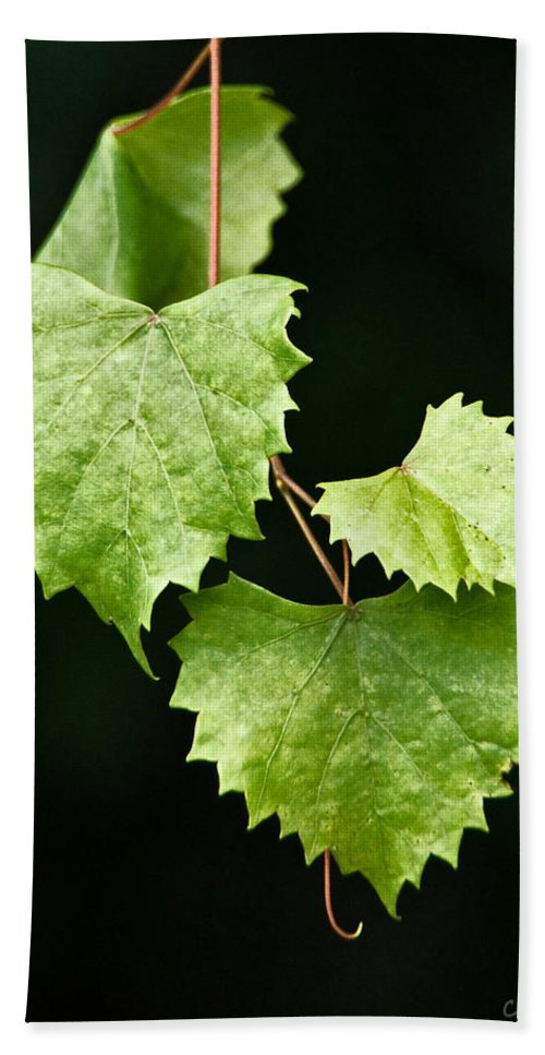 Flora Beach Towel featuring the photograph Green Leaves by Christopher Holmes