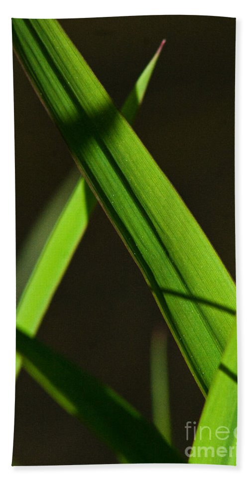 Green Beach Towel featuring the photograph Green Leaves In Sunlight by Martha Johnson