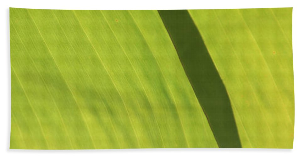Green Beach Towel featuring the photograph Green Study One by Dean Triolo
