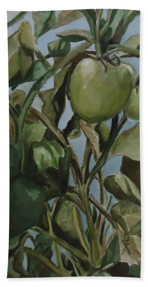 Green Tomatoes On The Vine. Decorative Beach Towel featuring the painting Green Tomatoes On The Vine by Charme Curtin