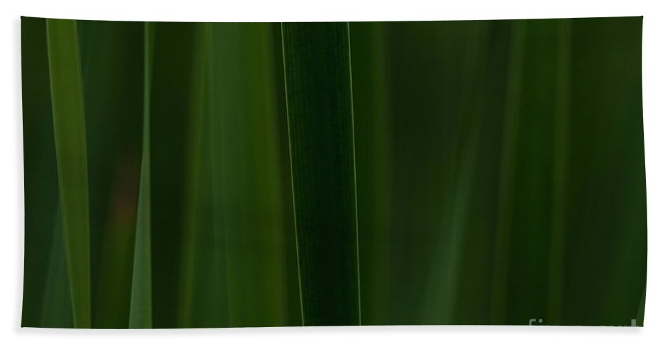 Festblues Beach Towel featuring the photograph Green Velvet... by Nina Stavlund