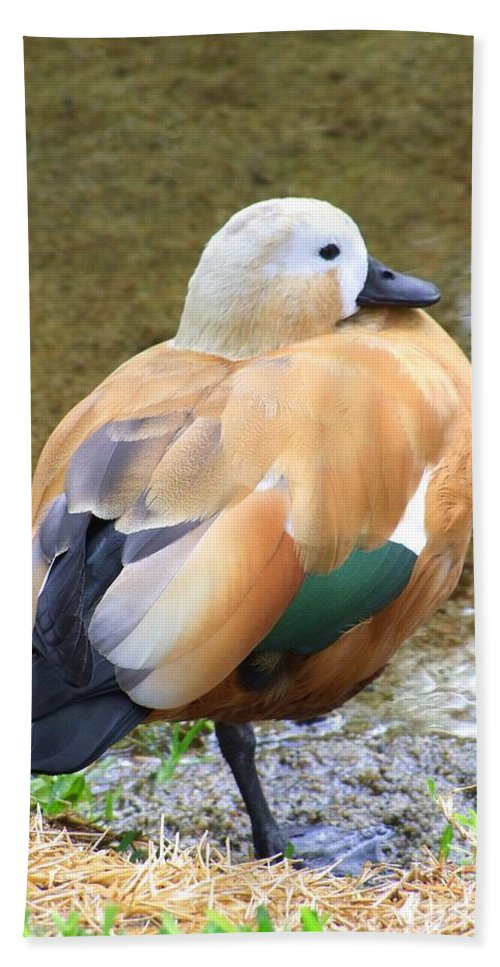 Green Beach Towel featuring the photograph Green Winged Wood Duck 2 by Mary Deal