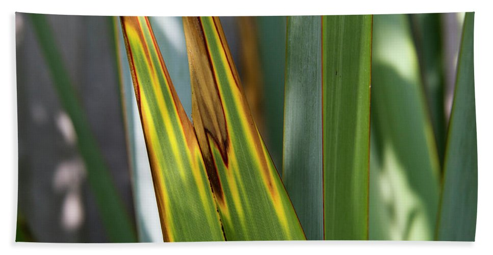 Abstract Beach Towel featuring the photograph Green Yellow Brown by Gary Eason