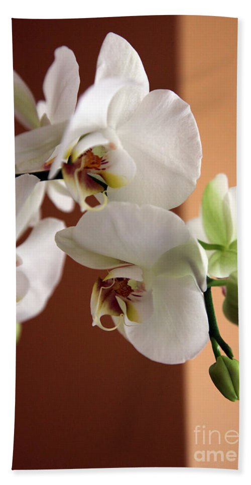 Orchid Beach Towel featuring the photograph Greeting The Day by Amanda Barcon