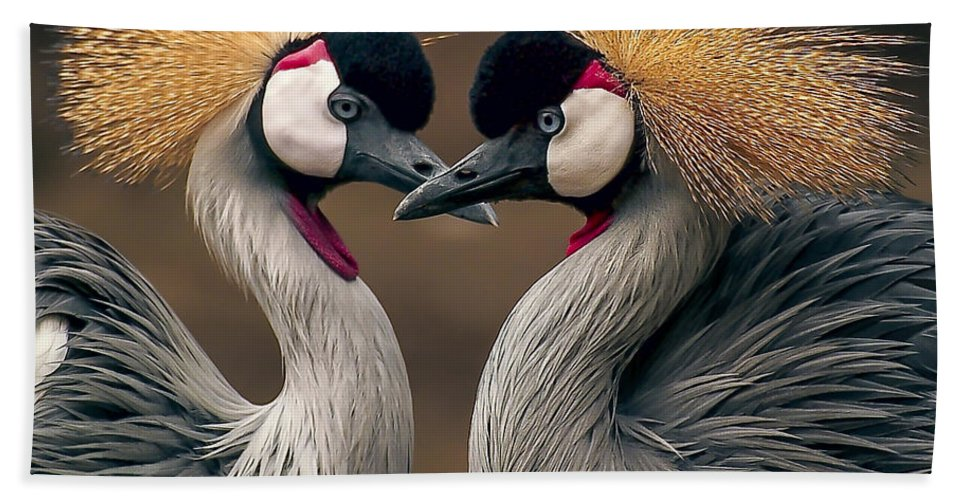 Crane Beach Towel featuring the photograph Grey Crowned Cranes Of Africa by Daniel Hagerman