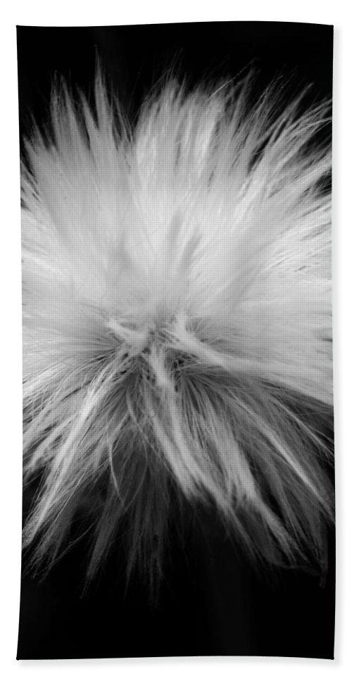 Garden Beach Towel featuring the photograph Grey Hairs by Juergen Weiss