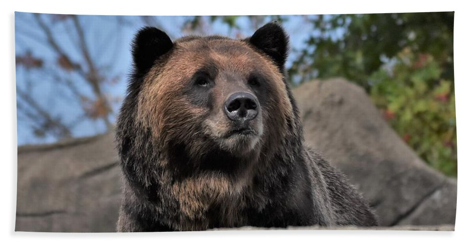 Bear Beach Towel featuring the photograph Grizzly Bear 1 by Flo McKinley