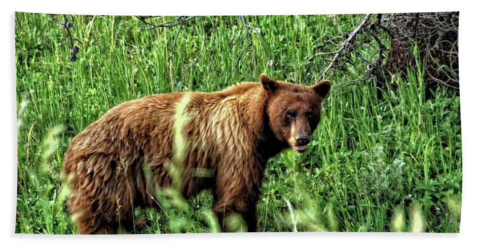 Animal Beach Towel featuring the photograph Grizzly Bear 2 by John Trommer