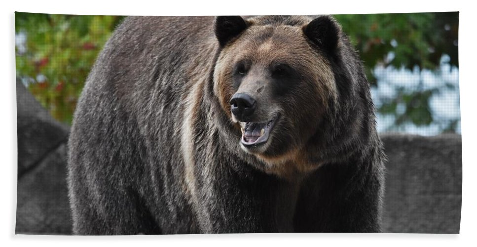 Bear Beach Towel featuring the photograph Grizzly Bear 3 by Flo McKinley