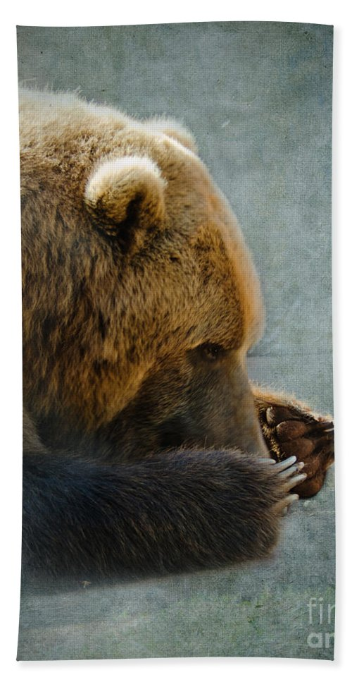 Bear Beach Towel featuring the photograph Grizzly Bear Lying Down by Betty LaRue