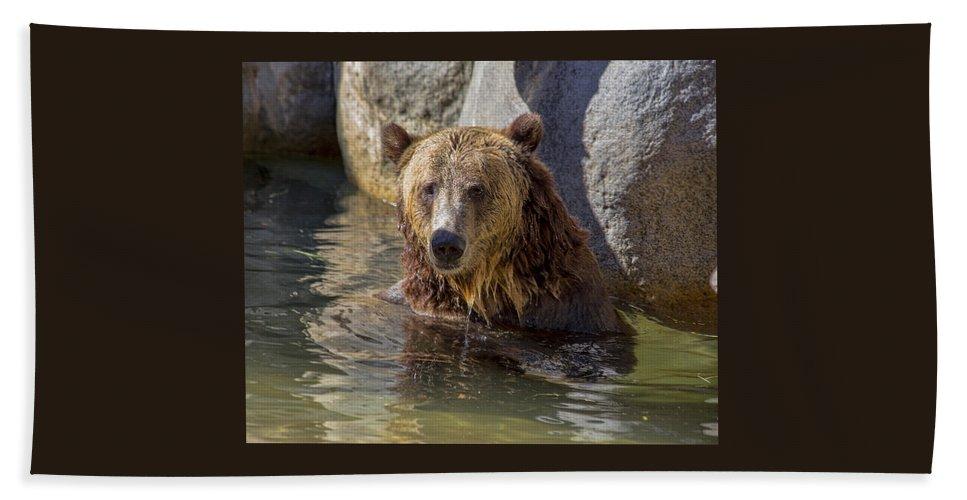 Grizzly Bear Beach Towel featuring the photograph Grizzly Bear - San Diego Zoo by TN Fairey