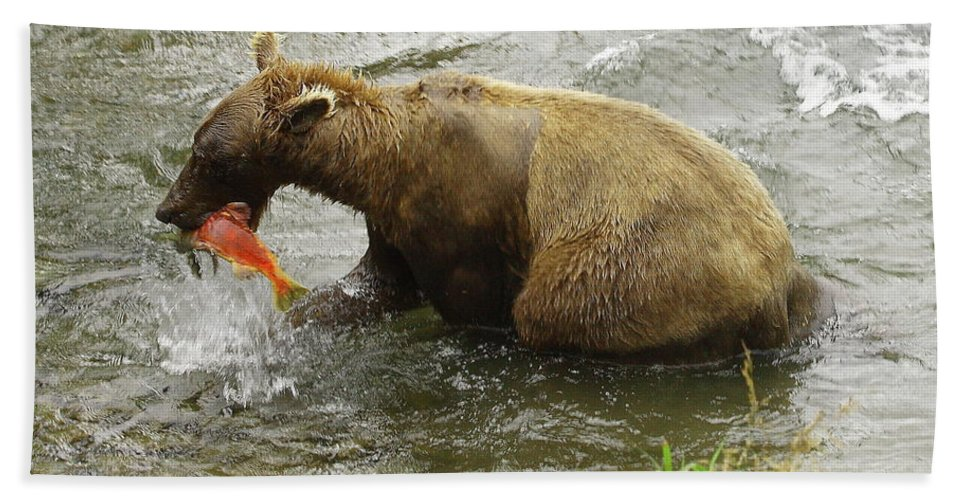 Grizzly Beach Towel featuring the photograph Grizzly Great Catch by Herbert L Fields Jr