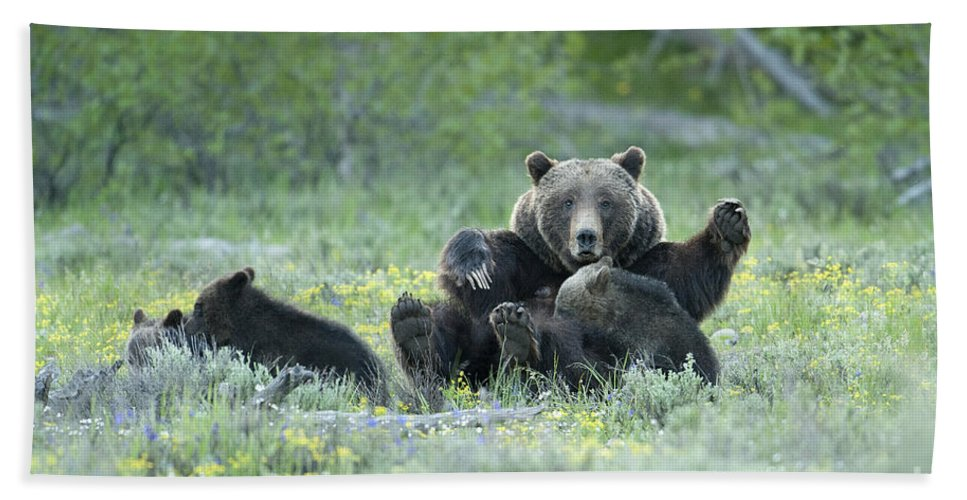 Bears Beach Towel featuring the photograph Grizzly Romp - Grand Teton by Sandra Bronstein