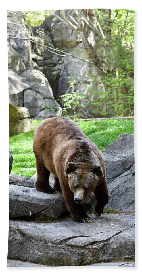 Grizzly Beach Towel featuring the photograph Grizzly by Sherri Johnson