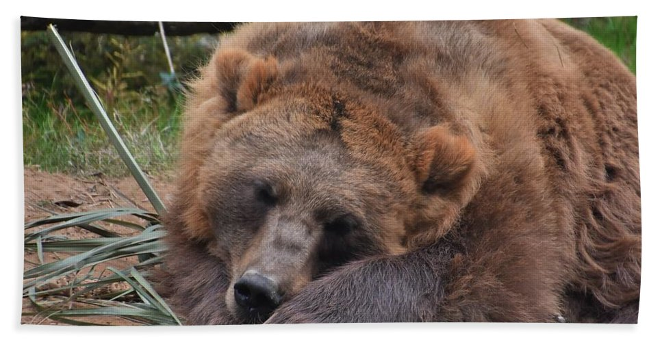 Mammals Beach Towel featuring the photograph Grizzly's Naptime by Flo McKinley