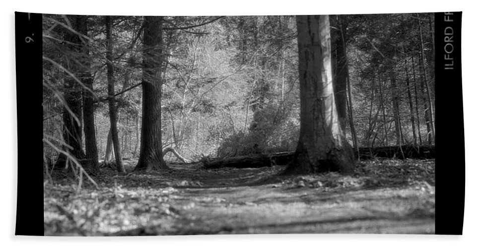 Trees Beach Towel featuring the photograph Ground Floor by Jean Macaluso