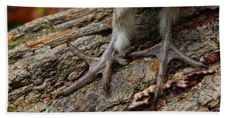 Tim Flanigan Beach Towel featuring the photograph Grouse Feet by Timothy Flanigan