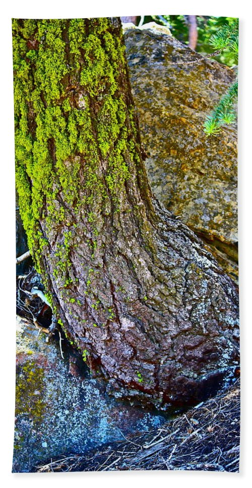 Tree Beach Towel featuring the photograph Grow Anyway by Diana Hatcher
