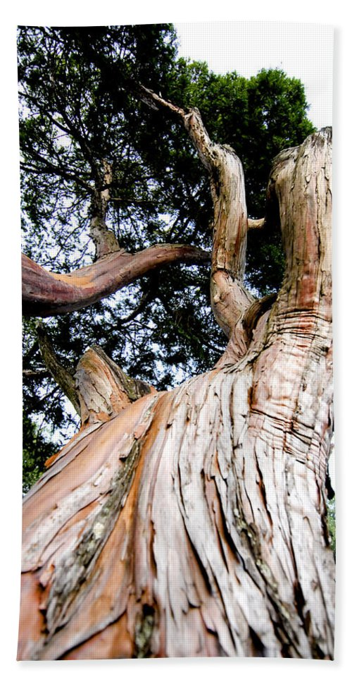 Tree Beach Towel featuring the photograph Growth by Greg Fortier