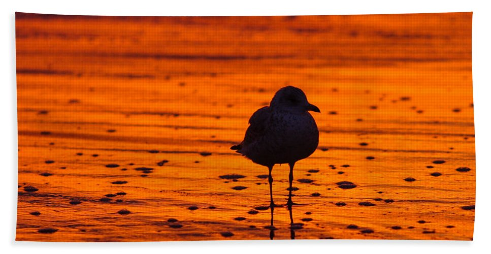 Great Beach Towel featuring the photograph Gull Caught At Sunrise by Allan Levin